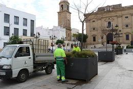 Operarios en labores de reposición de arbolado en la Plaza Mayor
