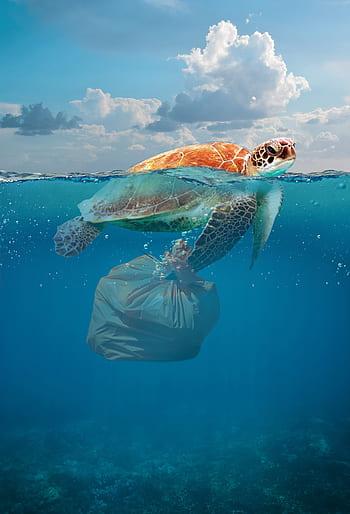 11. Problemática del plástico.